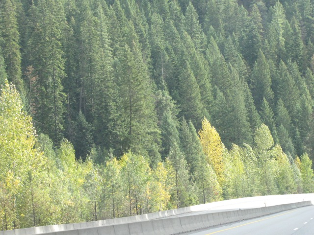 Idaho Panhandle National Forest - Interstate 90