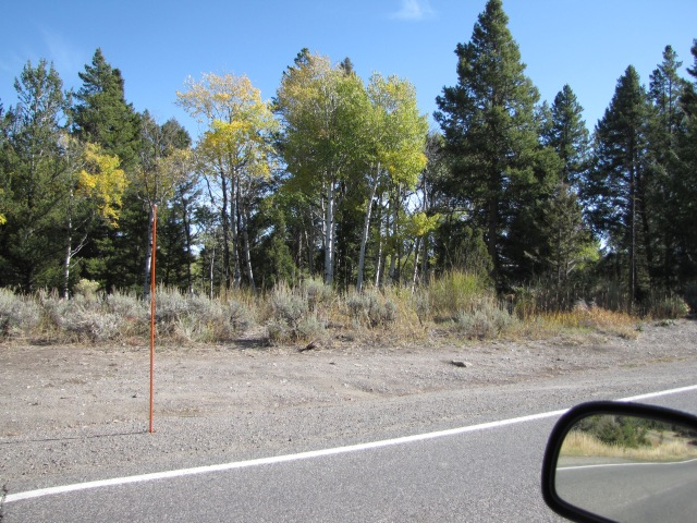 Aspen - going south on Grand Loop Road
