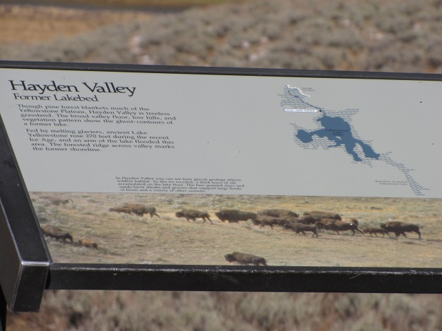 Hayden Valley