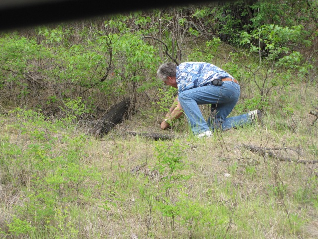 Nolemana trying to dig out a lilac root for me